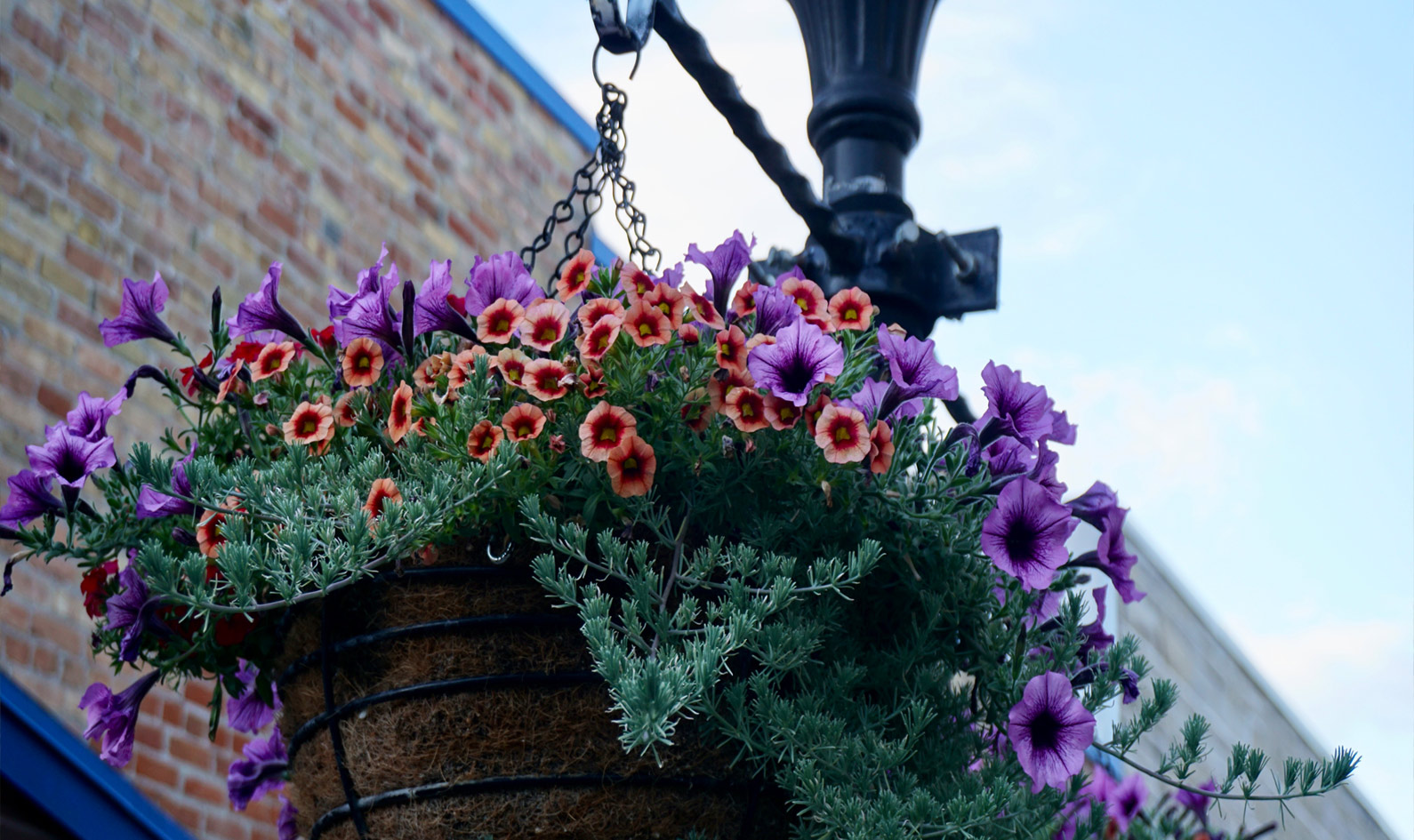 Historic Main street hanging flower beds