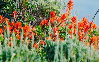 Park City Utah Flowers